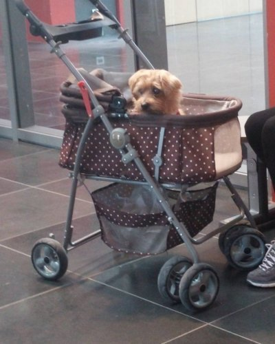 Its a dogs life at Perugia airport